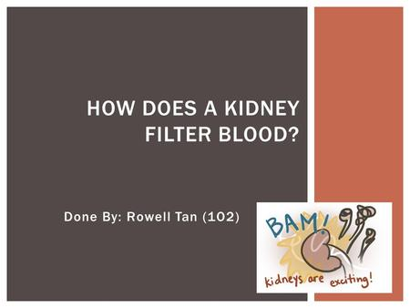 How does a kidney filter blood?