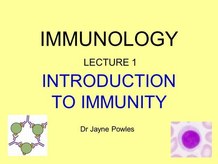 INTRODUCTION TO IMMUNITY IMMUNOLOGY LECTURE 1 Dr Jayne Powles.