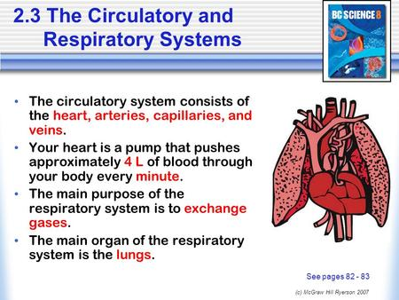 (c) McGraw Hill Ryerson 2007 2.3 The Circulatory and Respiratory Systems The circulatory system consists of the heart, arteries, capillaries, and veins.