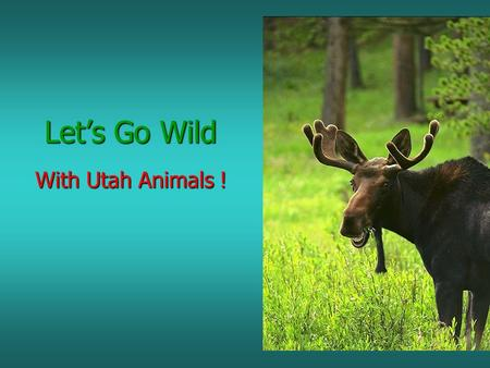 Let's Go Wild With Utah Animals !. We will study 5 groups of Animals MAMMALS MAMMALS BIRDS BIRDS REPTILES REPTILES AMPHIBIANS AMPHIBIANS FISH FISH.