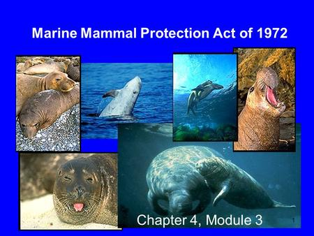 Marine Mammal Protection Act of 1972 Chapter 4, Module 3 1.