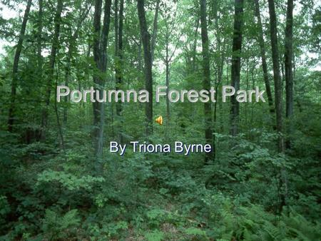 Portumna Forest Park By Triona Byrne BackgroundBackground Tree Species Wildlife CastleTree SpeciesWildlife Castle Main menu Click on a title below QUIZ.