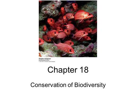 Chapter 18 Conservation of Biodiversity. The 6 th Mass Extinction Extinction – the process whereby a species dies-out We are currently losing approximately.