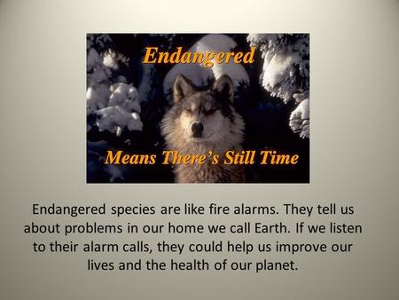 Endangered species are like fire alarms. They tell us about problems in our home we call Earth. If we listen to their alarm calls, they could help us improve.