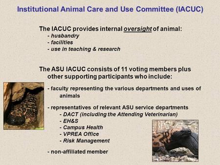 Institutional Animal Care and Use Committee (IACUC) The IACUC provides internal oversight of animal: - husbandry - facilities - use in teaching & research.
