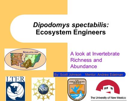 Dipodomys spectabilis: Ecosystem Engineers A look at Invertebrate Richness and Abundance By: Scott Johnson Mentor: Andrew Edelman.