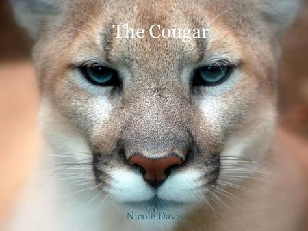The Cougar Nicole Davis. C OUGAR F ACTS Run up to forty-three miles per hour. Jump twenty feet from a standing position, and leap sixteen feet vertically.