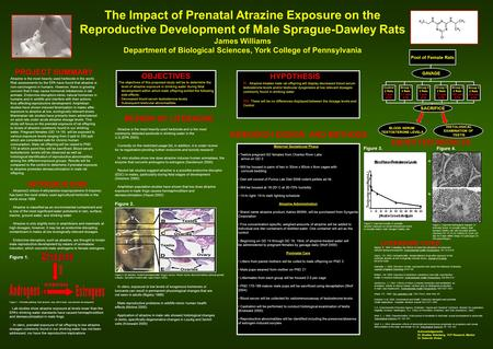 The Impact of Prenatal Atrazine Exposure on the Reproductive Development of Male Sprague-Dawley Rats James Williams Department of Biological Sciences,