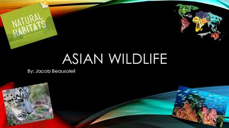 ASIAN WILDLIFE By: Jacob Beausoleil. GEOGRAPHY Within Asia there are 3 major geographical areas. There are vast snowcapped mountain ranges, low wet line.
