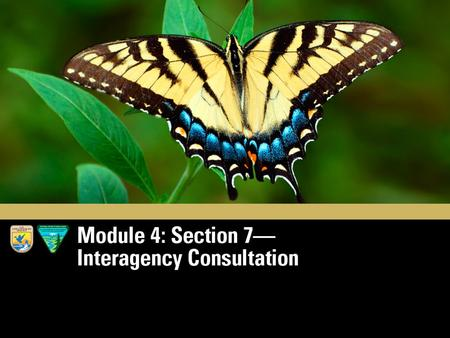 Module 4 Section 7 Interagency Cooperation. The Subtitle of Section 7: Federal Agency Actions and Consultations Credit: istockphoto.com.