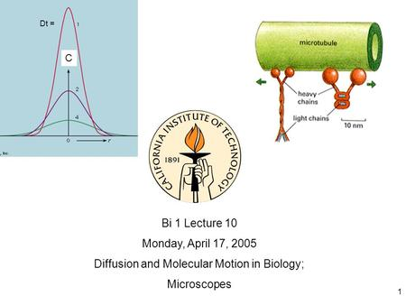 1 Bi 1 Lecture 10 Monday, April 17, 2005 Diffusion and Molecular Motion in Biology; Microscopes C Dt =