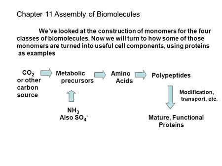Chapter 11 Assembly of Biomolecules We've looked at the construction of monomers for the four classes of biomolecules. Now we will turn to how some of.