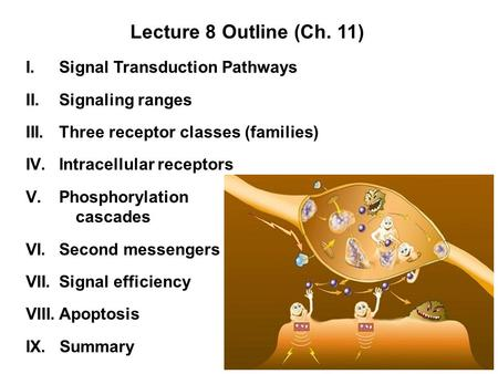 I.Signal Transduction Pathways II.Signaling ranges III.Three receptor classes (families) IV.Intracellular receptors V.Phosphorylation cascades VI.Second.