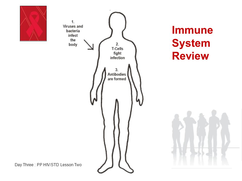 HIV Takes Over the Immune System to Produce More HIV Day Three: PP HIV/STD Lesson Two