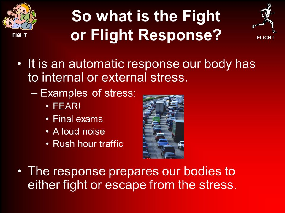 FIGHT FLIGHT So what is the Fight or Flight Response.