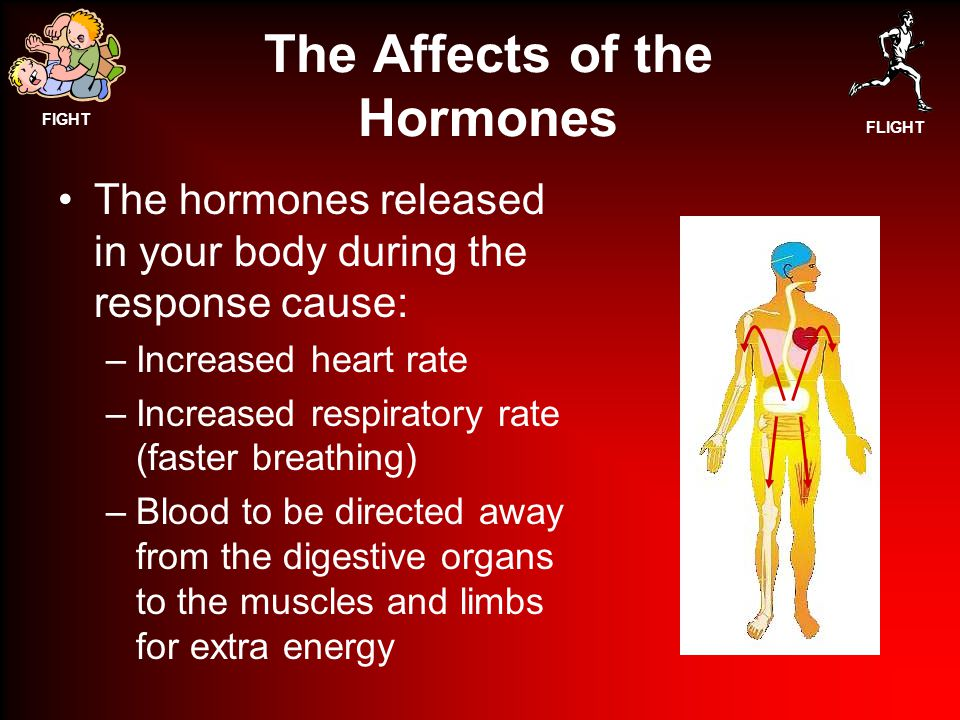 FIGHT FLIGHT The Affects of the Hormones The hormones released in your body during the response cause: –Increased heart rate –Increased respiratory rate (faster breathing) –Blood to be directed away from the digestive organs to the muscles and limbs for extra energy