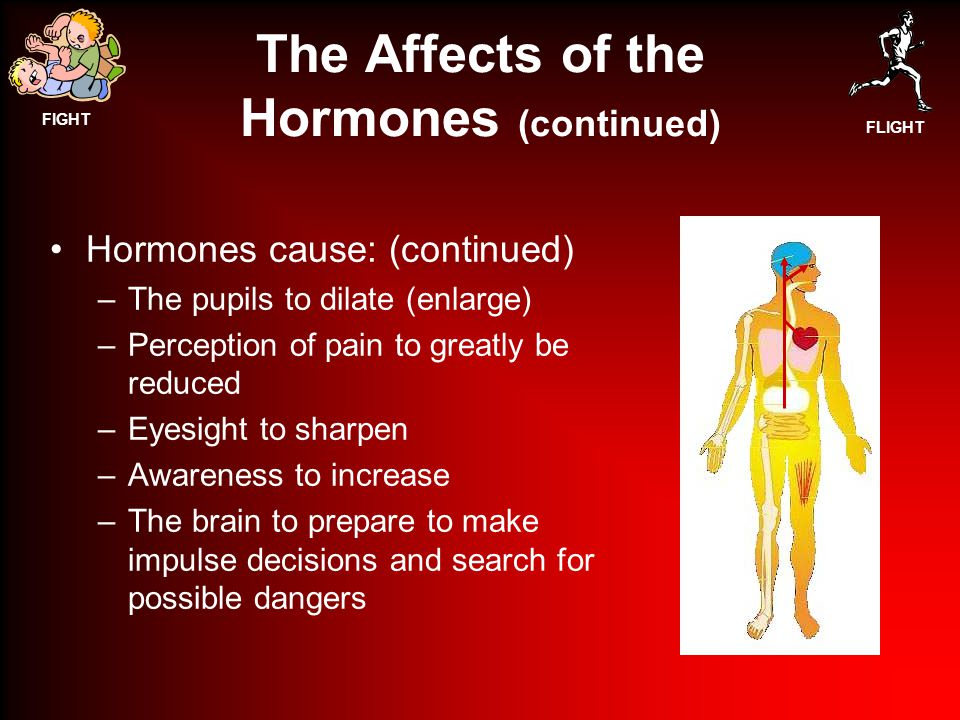 FIGHT FLIGHT The Affects of the Hormones (continued) Hormones cause: (continued) –The pupils to dilate (enlarge) –Perception of pain to greatly be reduced –Eyesight to sharpen –Awareness to increase –The brain to prepare to make impulse decisions and search for possible dangers