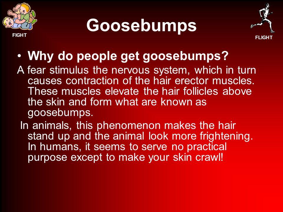 FIGHT FLIGHT Goosebumps Why do people get goosebumps.