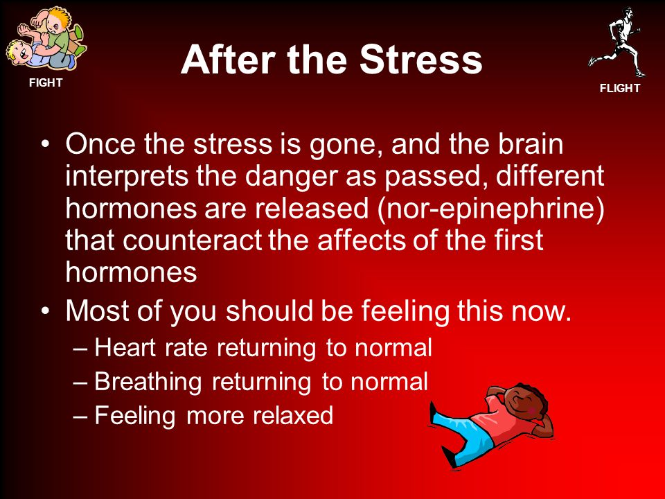 FIGHT FLIGHT After the Stress Once the stress is gone, and the brain interprets the danger as passed, different hormones are released (nor-epinephrine) that counteract the affects of the first hormones Most of you should be feeling this now.