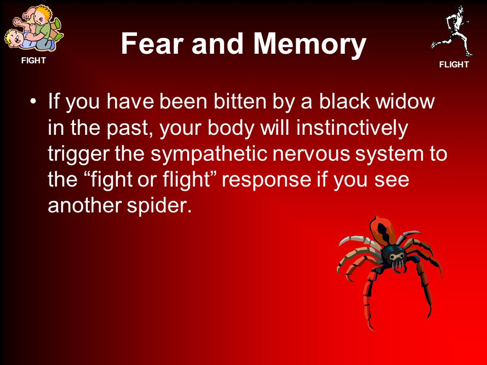 FIGHT FLIGHT Fear and Memory If you have been bitten by a black widow in the past, your body will instinctively trigger the sympathetic nervous system to the fight or flight response if you see another spider.