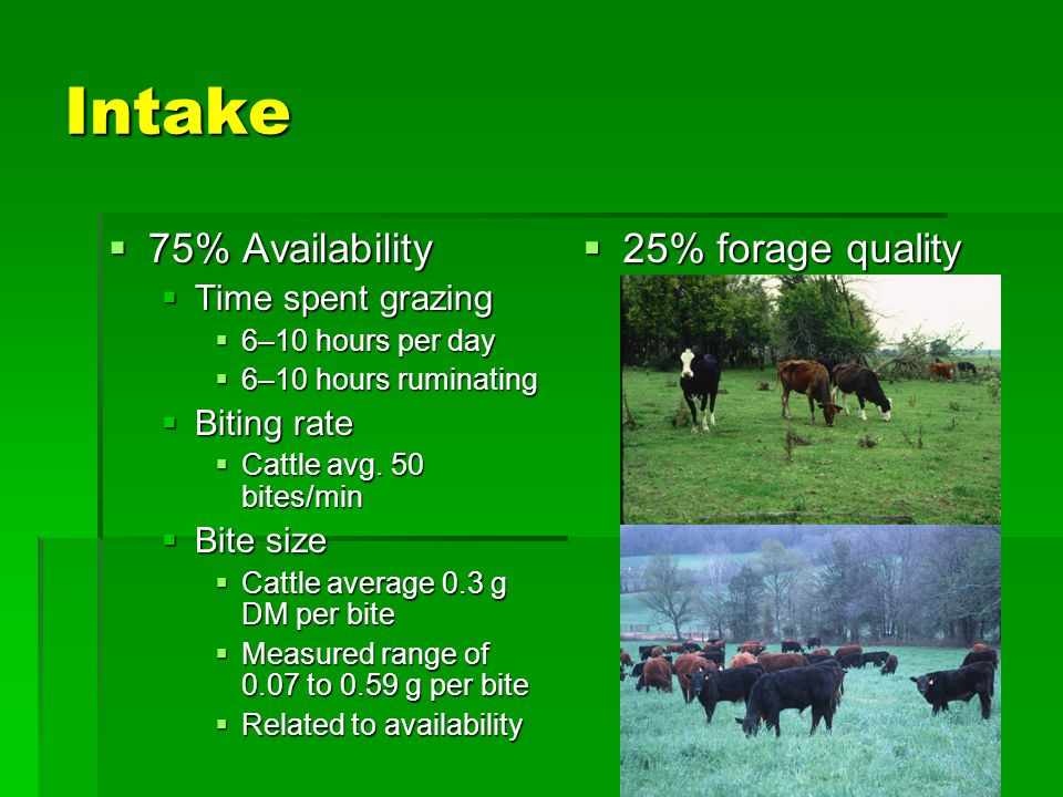 Factors Affecting Intake Dry matter intake = Biting Rate x Biting (grazing) Time x Bite Size Dry matter intake = 50 bites/min x 600 min/day x 0.3 g/bite = 9.0 kg or 19.8 lb DM intake per day