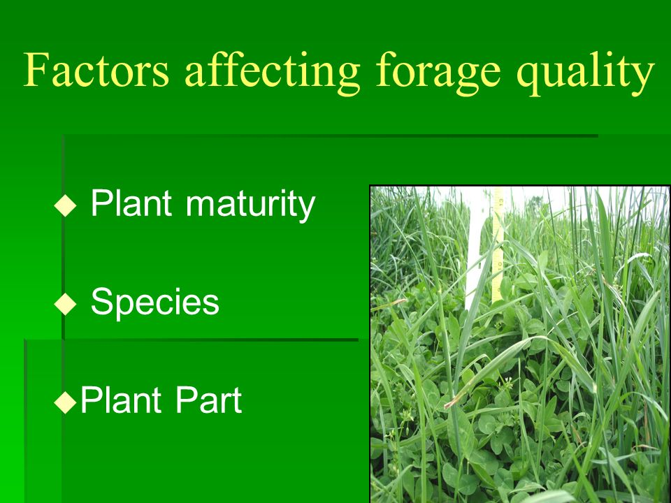 Factors affecting forage quality u Plant maturity n Growth stage n Length of rest period
