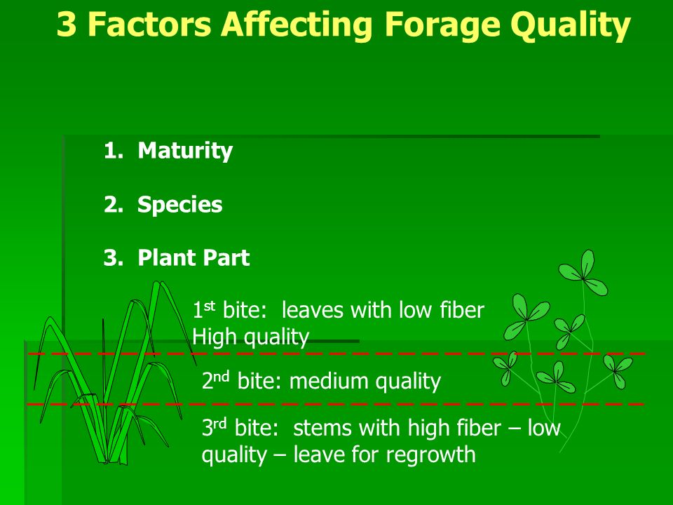 Animal Requirements vs Forage Quality at Different Maturities Can use different stages of quality to our advantageCan use different stages of quality to our advantage Adjust body condition scoreAdjust body condition score Increase, maintain, or decrease body conditionIncrease, maintain, or decrease body condition Creep grazingCreep grazing Calves allowed to creep gaze into higher quality pastureCalves allowed to creep gaze into higher quality pasture Leader – Follower grazingLeader – Follower grazing Animals with highest nutrient needs graze pasture first followed by those with lower nutritional needsAnimals with highest nutrient needs graze pasture first followed by those with lower nutritional needs High Quality -First grazers Medium quality - Last grazers