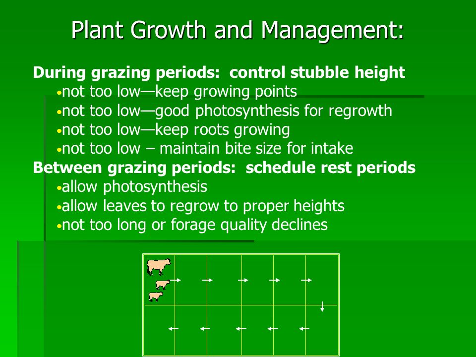 Plant Growth and Management: Example: 12 paddock system Grazing period2 day 3 day4 day Rest Period 22 day 33 day 44 day Flexibility!