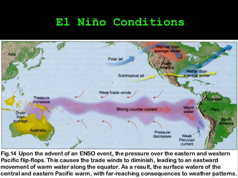 Walker Cells El Niño: 1998 Event