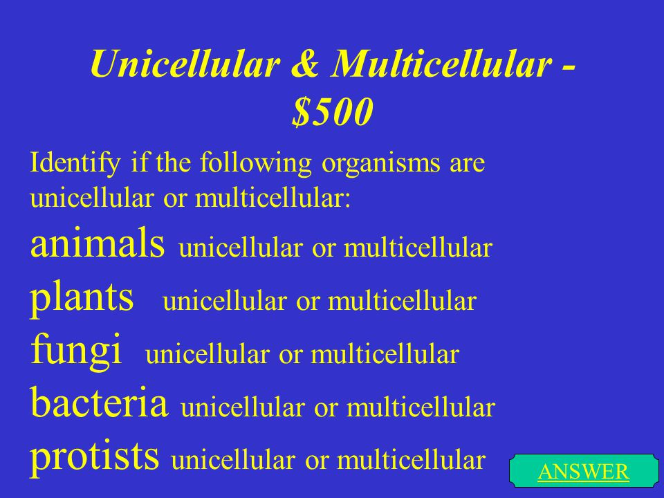 Unicellular & Multicellular - $500 ANSWER Identify if the following organisms are unicellular or multicellular: animals unicellular or multicellular plants unicellular or multicellular fungi unicellular or multicellular bacteria unicellular or multicellular protists unicellular or multicellular
