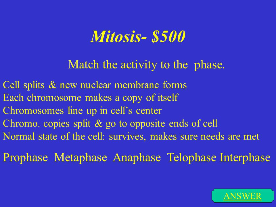 Mitosis- $500 ANSWER Match the activity to the phase.