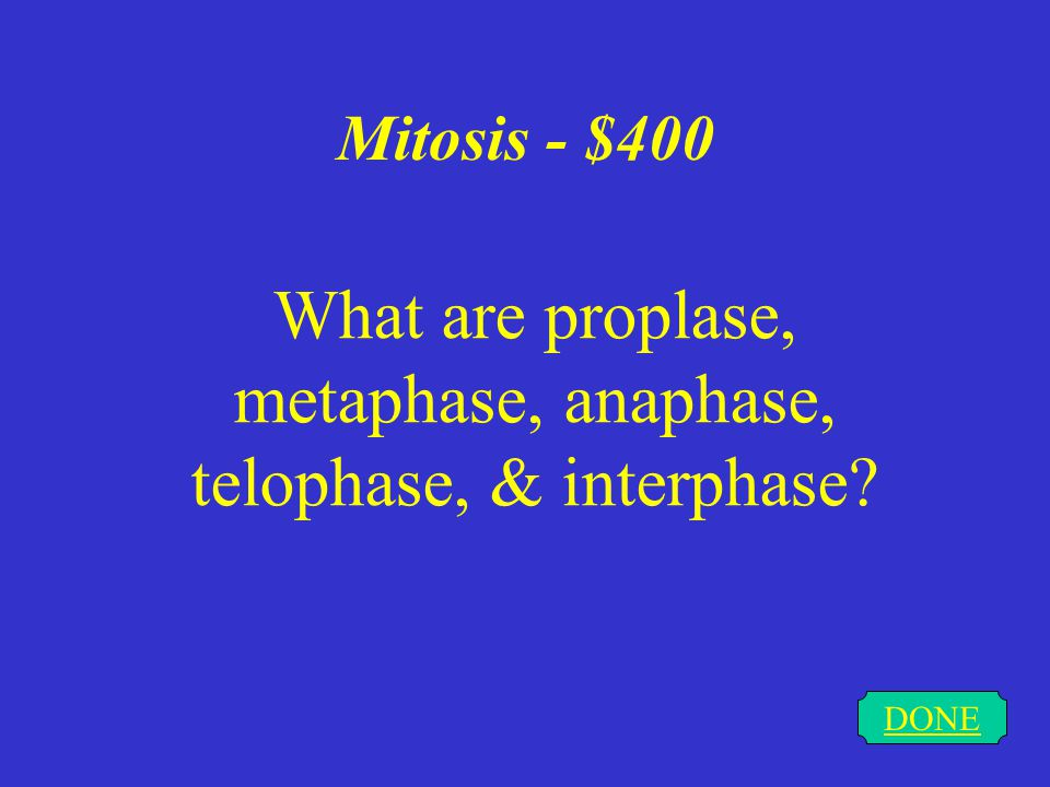 Mitosis - $400 DONE What are proplase, metaphase, anaphase, telophase, & interphase?