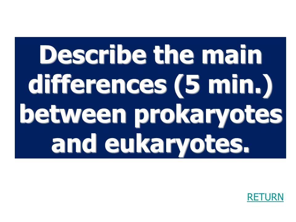 Describe the main differences (5 min.) between prokaryotes and eukaryotes.