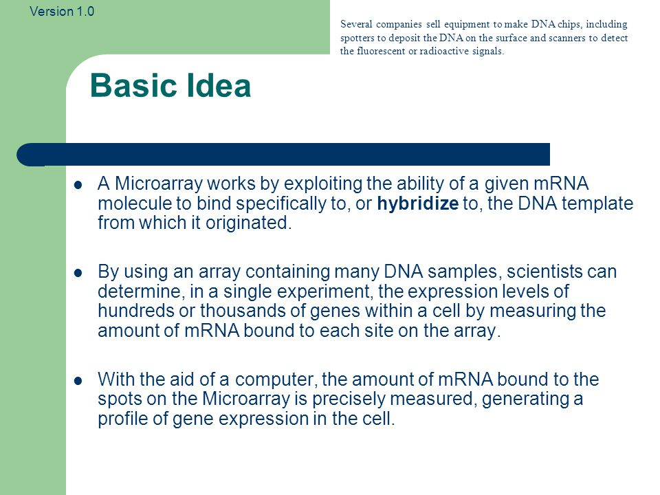 Version 1.0 Microarray Process The molecules in the target biological sample are labelled using a fluorescent dye before sample is applied to array – If a gene is expressed in the sample, the corresponding mRNA hybridises with the molecules on a given probe (array location).