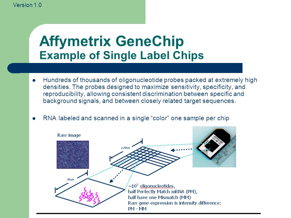 Version 1.0 From Microarray images to Gene Expression Matrices Images Spots Spot/Image quantiations Intermediate data Samples Genes Gene expression levels Final data Gene Expression Matrix Raw data Array scans