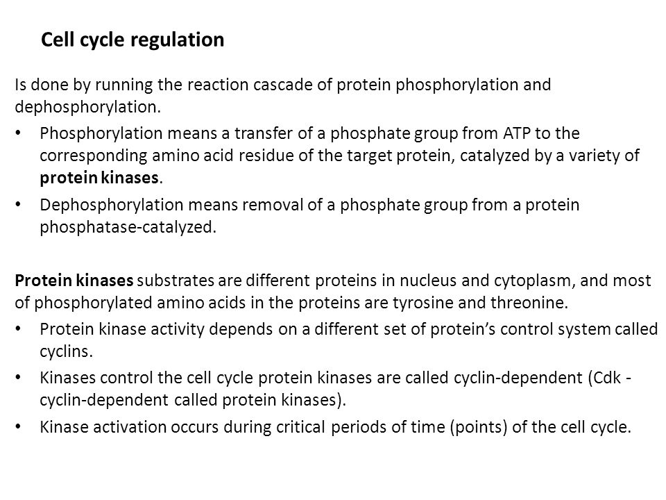 Checkpoints (no return) i cell cycle  Checkpoint in late G1 phase controls G1/S transition, called START.