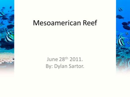 Mesoamerican Reef June 28 th 2011. By: Dylan Sartor.