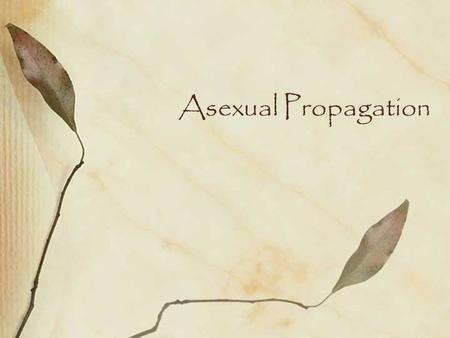 Asexual Propagation. Two Types of Reproduction in Plants Sexual Reproduction –development of new plants by the process of meiosis and fertilization in.