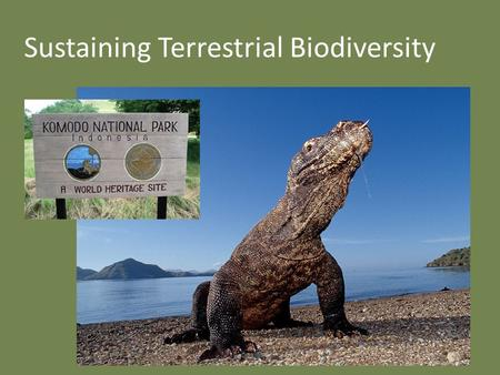 Sustaining Terrestrial Biodiversity. Biodiversity in Indonesia 18,000+ islands 6,000 inhabited Land being cleared by illegal logging and conversion to.