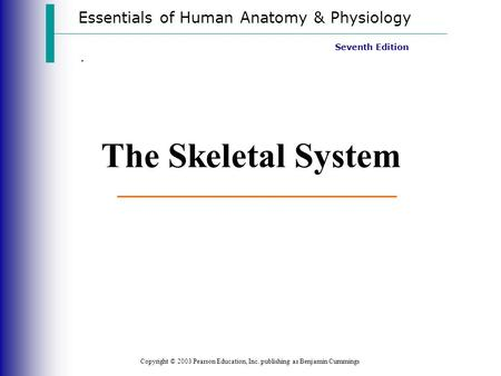 Essentials of Human Anatomy & Physiology Copyright © 2003 Pearson Education, Inc. publishing as Benjamin Cummings Seventh Edition. The Skeletal System.