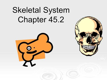 Skeletal System Chapter 45.2. The Skeleton  Main functions: rigid framework for support, protection, allowing bodily movement, producing blood, and storing.