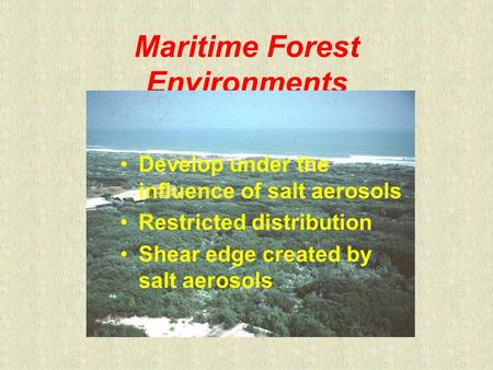Maritime Forest Environments Develop under the influence of salt aerosols Restricted distribution Shear edge created by salt aerosols.