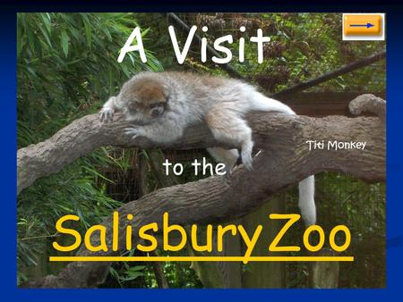 to the Salisbury Zoo A Visit Titi Monkey American Alligator.
