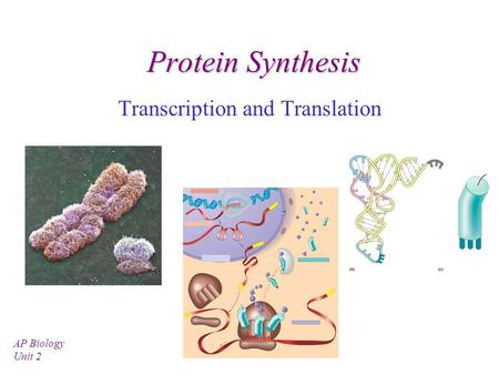 Protein Synthesis Transcription and Translation AP Biology Unit 2.