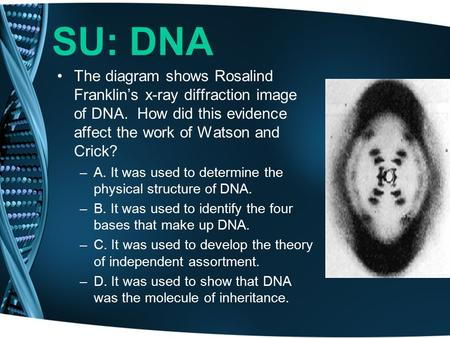SU: DNA The diagram shows Rosalind Franklin's x-ray diffraction image of DNA. How did this evidence affect the work of Watson and Crick? –A. It was used.