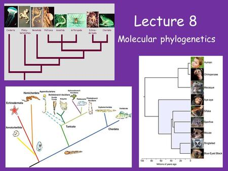 Lecture 8 Molecular phylogenetics. The goal of phylogeny is simply to reconstruct the historical relationships between a group of taxa NB: Phylogenetic.