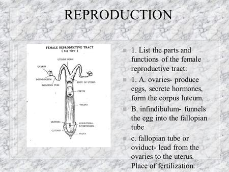 REPRODUCTION n 1. List the parts and functions of the female reproductive tract: n 1. A. ovaries- produce eggs, secrete hormones, form the corpus luteum.