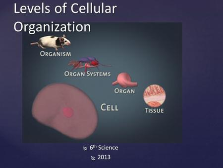  6 th Science  2013 Levels of Cellular Organization.