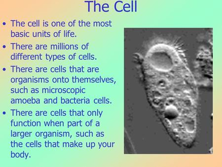 The Cell The cell is one of the most basic units of life. There are millions of different types of cells. There are cells that are organisms onto themselves,