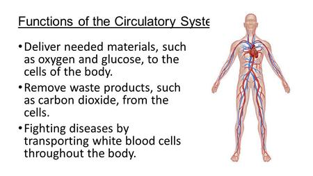 Functions of the Circulatory System Deliver needed materials, such as oxygen and glucose, to the cells of the body. Remove waste products, such as carbon.